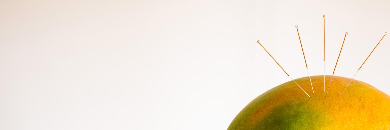 roterschnabel Mango mit Akkupunkturnadeln
